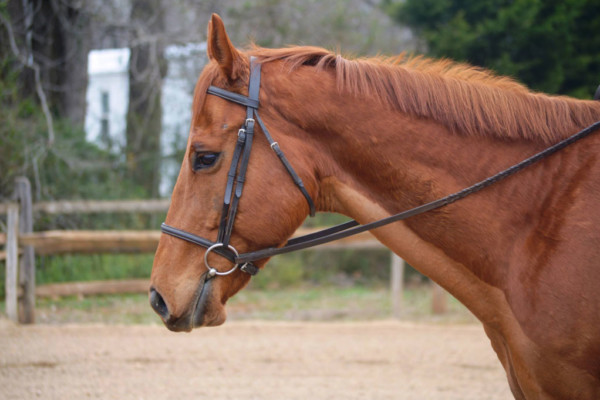 Support Horse Rescue at Cellar 4201