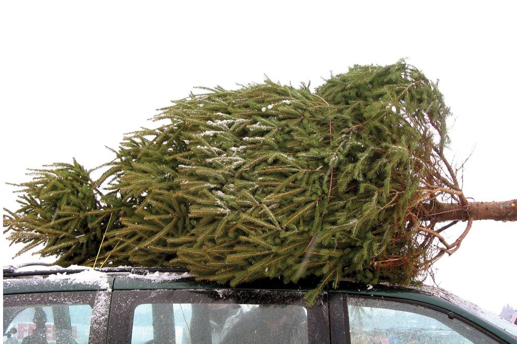 Buying the Perfect Christmas Tree