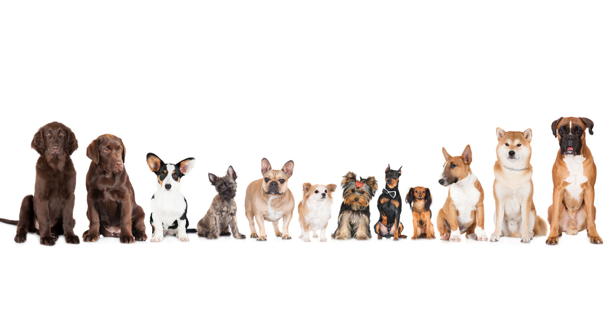 Six Ways to Celebrate August 26, National Dog Day