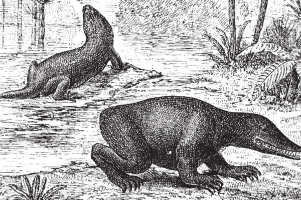 Dinosaurs in the Congo: Thought to be long gone, natives say dinosaurs still exist