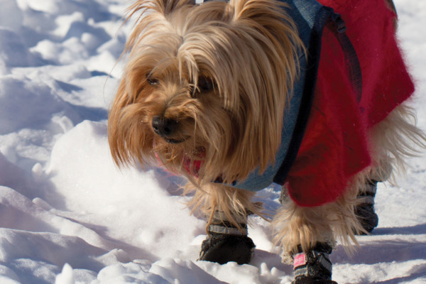 Pet Safety During the Winter