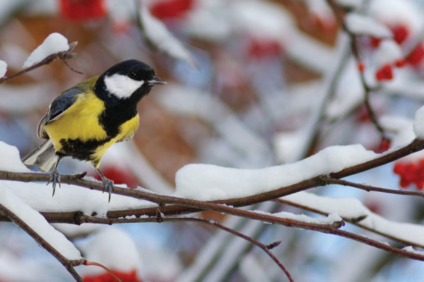 Help Your Feathered Friends Survive the Winter Weather