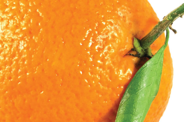 """""""Is that an orange in your purse?"""" and Other Questions to Prepare for When Dieting"""