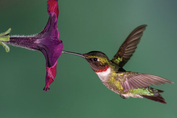 The Fascinating Lives of Hummingbirds: Time to Feed Them!