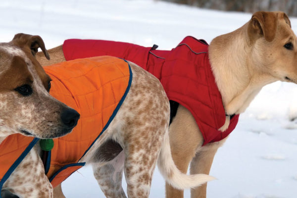 13 Ways to Protect Your Dog in Winter