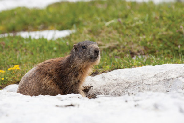 7 Facts You May Not Know about Groundhog Day