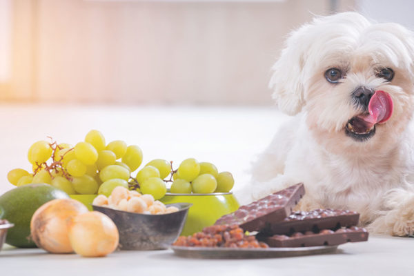 No, No, Fido! Human Foods You Should Never Feed Your Dog