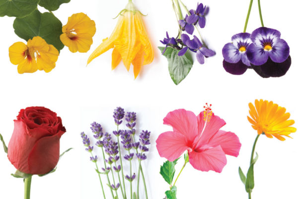 EDIBLE FLOWERS - NIBBLE, SIP AND SAVOR!